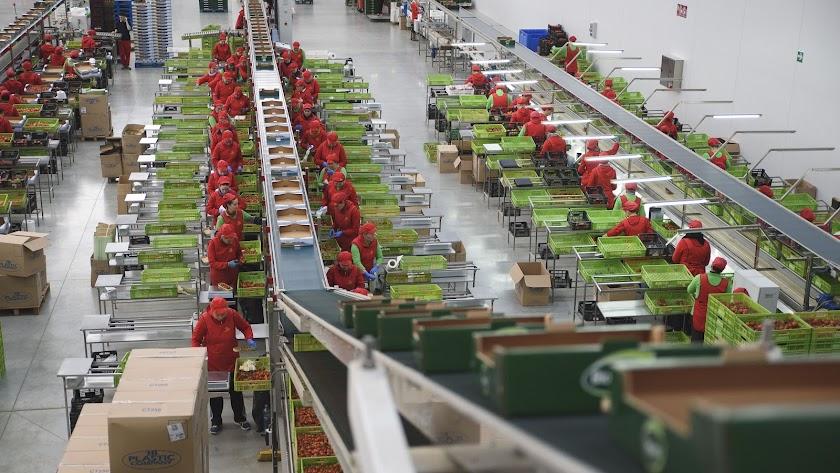 Lineal de manipulado de la empresa Biosabor, en San Isidro de Níjar.