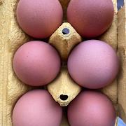 eggs — half dozen