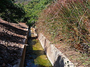 Photo: Vetiver hedge row protecting a drainage channel.