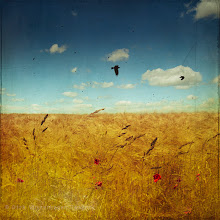 Photo: endless field Have a great SUNday! a nice example of the use of my bird brusheshttp://crtv.mk/a08TP