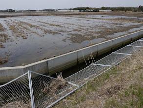Photo: 津波をかぶった田を洗っています。何回も冠水・排水を繰り返すそうです。
