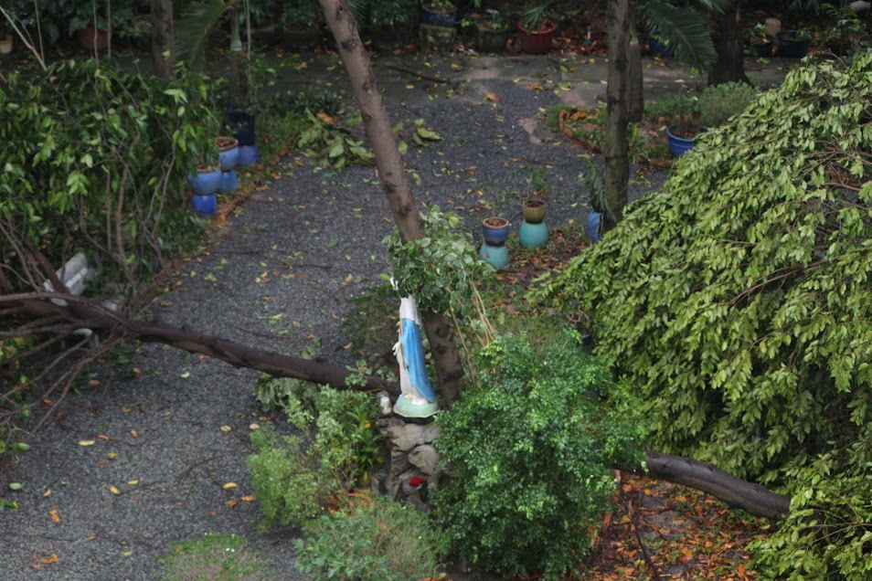 Phép lạ: Tượng Đức Mẹ Học viện Dòng Tên vẫn đứng vững trong cơn gió lốc - Ảnh minh hoạ 4