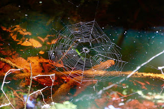 Photo: Spider web over water.