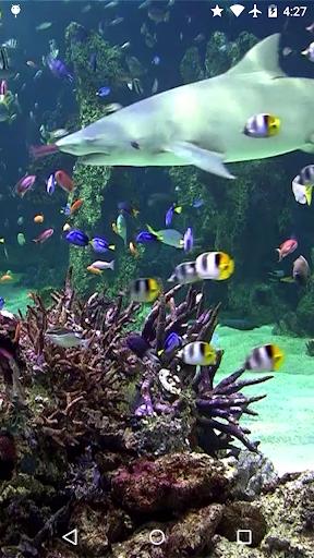 Video Wallpaper: Aquarium