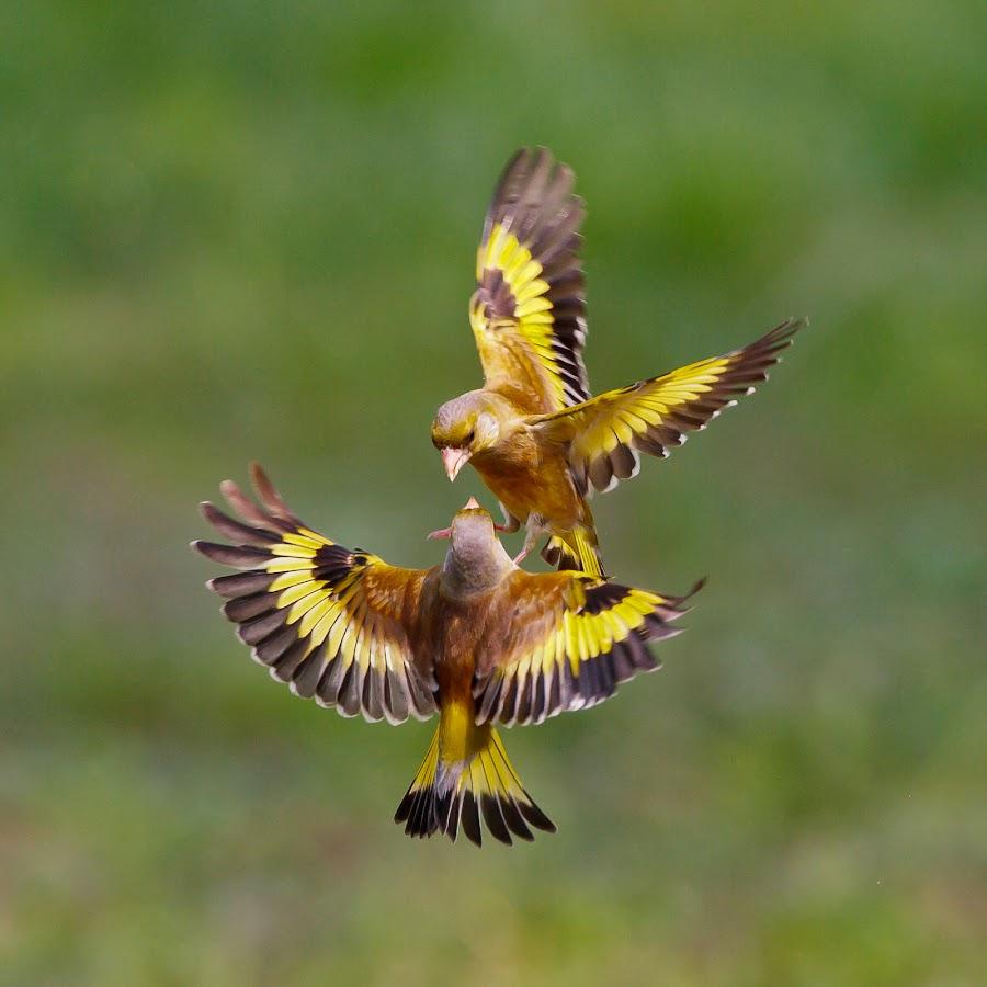 by Stephen Yang - Animals Birds
