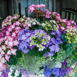 Floral Fantasy by Lye Danny - Flowers Flower Gardens