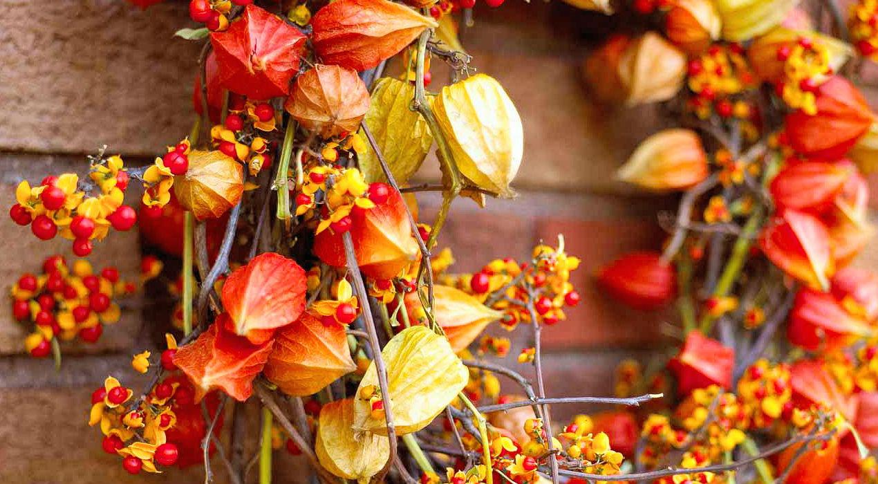 Красиві та яскраві фото восени