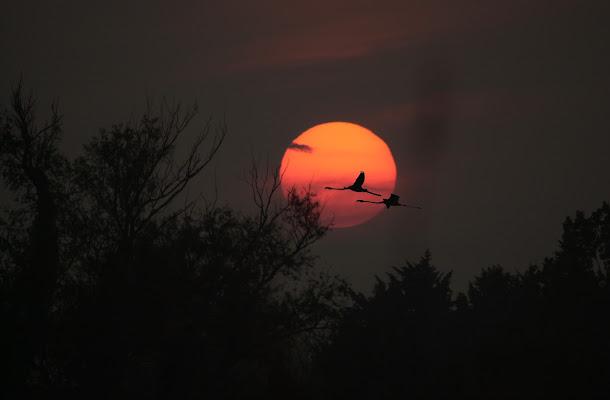 Fenicotteri contro il sole