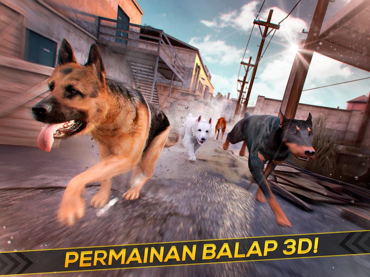 Anjing Balap Hewan Peliharaan Apl Android Di Google Play
