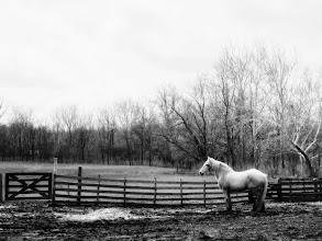 Photo: Black and white photo of a silvery horse in the spring at Carriage Hill Metropark in Dayton, Ohio.