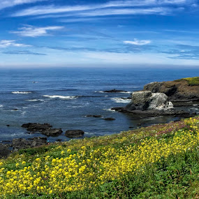 Yaquina Head Wildflowers by Clement Stevens - Landscapes Travel ( yaquina, clouds, wildflowers, waves, lighthouse, flowers, rocks, coast )
