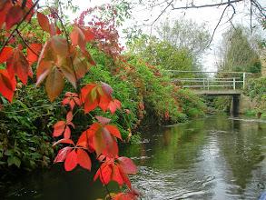 Photo: jesień