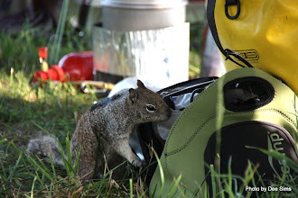 Photo: (Year 2) Day 359 - Squirrel Looking for Food