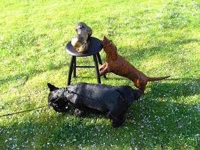 Photo: #022-Samson notre Scottish terrier au parc floral du Keukenhof.