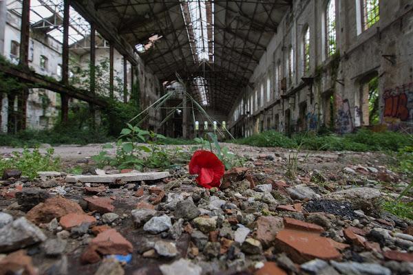 La vita nell'abbandono. di alemotionpics