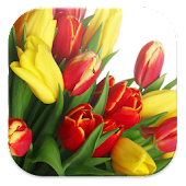 tulips live wallpapers free HD