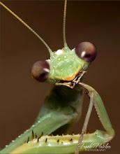 Photo: Dr. Evil Mantis