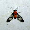 Possible wasp moth?