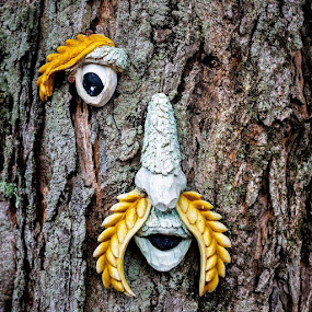 OdinTree by Michael Thorndike - Nature Up Close Trees & Bushes ( art, bark, connecticut, perspective, trees, eyes, canon )