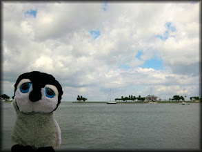 Photo: Looking out across the water at the St. Pete Pier.