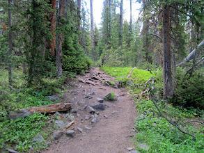 Photo: Lush green trail surroundings