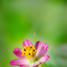 by Mohamad Sa'at Haji Mokim - Nature Up Close Flowers - 2011-2013