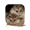 Hamster Care icon