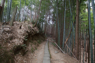Photo: Bamboo forest at Inari