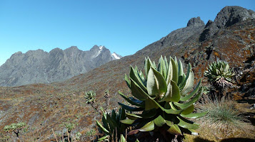 Photo du trekking dans le Ruwenzori