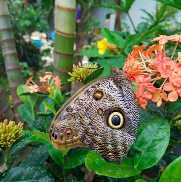The museum features 2,000 tropical and native butterflies.