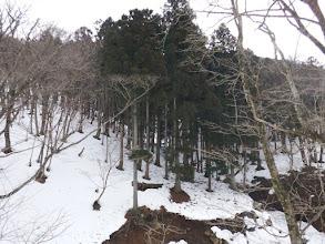 白船峠へは植林帯を進む