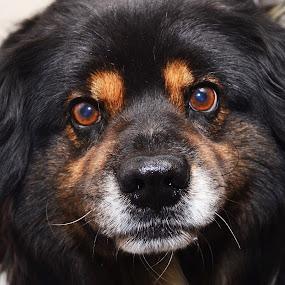 Sammy by Michael Cowan - Animals - Dogs Portraits ( shelter, adopt, dog )