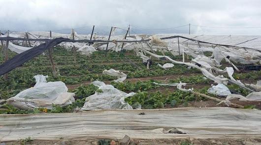Destrozos en 10 hectáreas de invernaderos de El Ejido por un remolino de viento