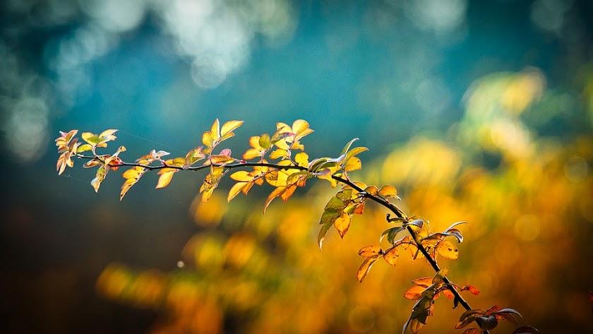 Llega el otoño,