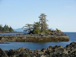 Photo: The Cleveland Peninsula shoreline along Clarence Strait near Niblack Point.