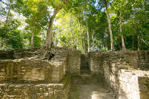 dzibanche-trees2.jpg - Dzibanche is an archaeological site of the ancient Maya civilization dating to 309 A.D.