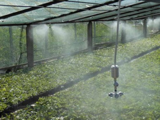 Установка для производства искусственного тумана при выращивании саженцев винограда