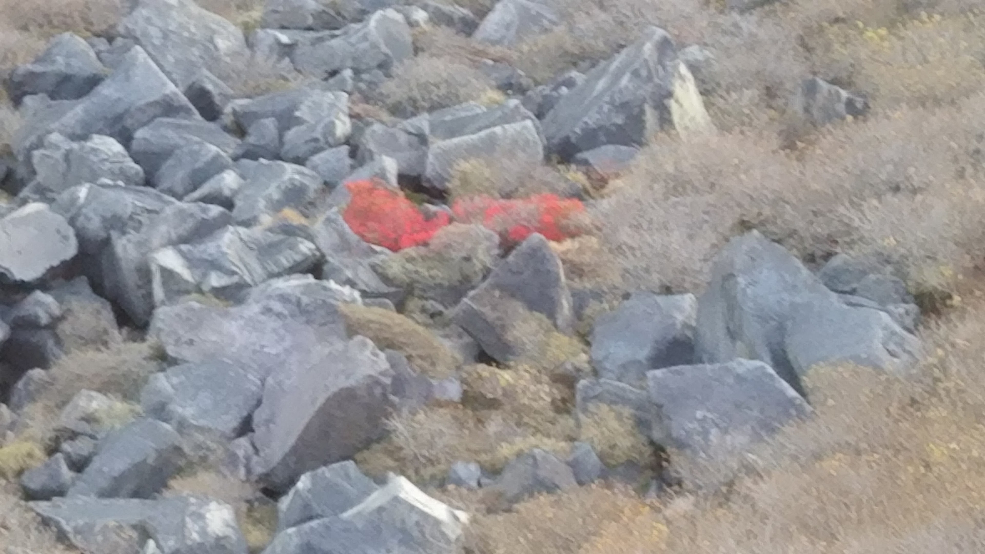 岩場に残る紅葉