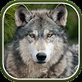 Download Wolf Live Wallpaper APK