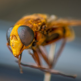 by Dusan Arezina - Animals Insects & Spiders ( macro, insect )