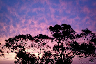 Photo: Purple sky