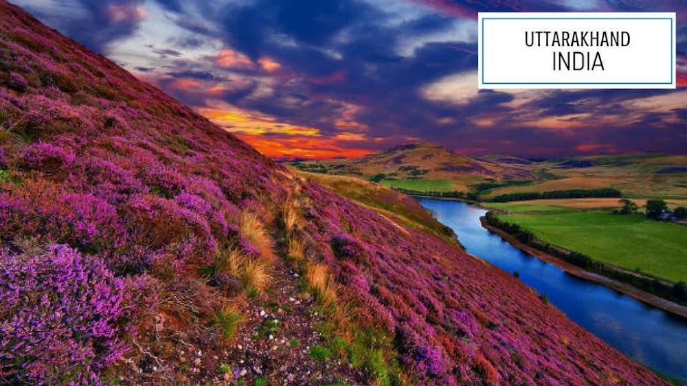 uttarakhand valley of flowers india_image