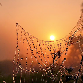 Sunrise with dewdrops by Shah Årif - Abstract Water Drops & Splashes ( macro, sunrise, nature up close, dewdrops, abtract )