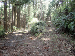よい林道と合流(右から降りてきた)