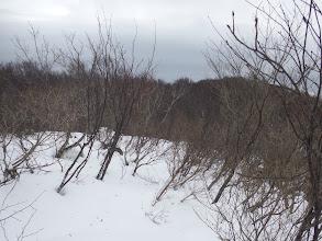前方の山頂まで藪を進む
