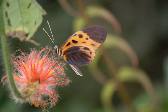 Photo: Butterflies are attracted to the same flowers as hummingbirds. More than once I saw a hummingbird chase one away.