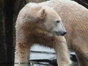 Photo: Knut haelt Ausschau nach Gianna ;-)