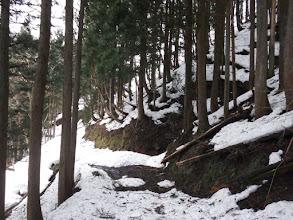 後は長い林道歩き
