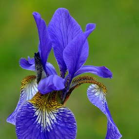 by Albina Jasinskaite - Nature Up Close Flowers - 2011-2013 (  )