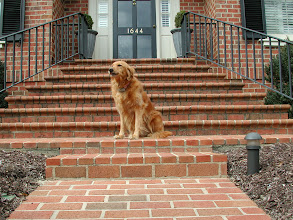 Photo: Customers Pet Pics By Pressure Washing Charlotte We Are Very Pet Friendly